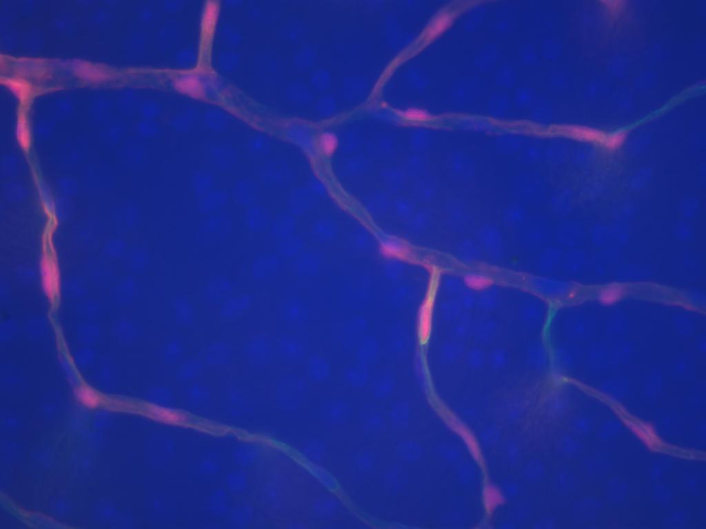 Retina Research Image