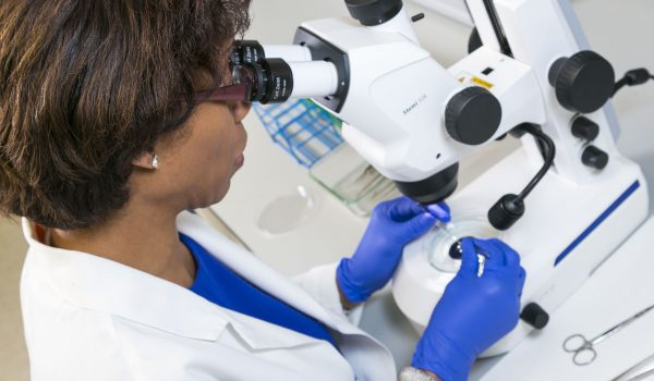 Dr. Terri Young in the lab