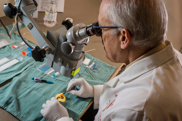 Dr. Paul Kaufman dissecting an eye in preparation for placement of a prototype device into Schlemm